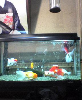 Pretty Fish!